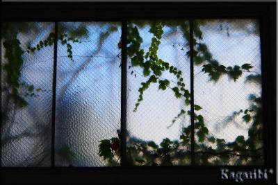 leaf21b.jpg