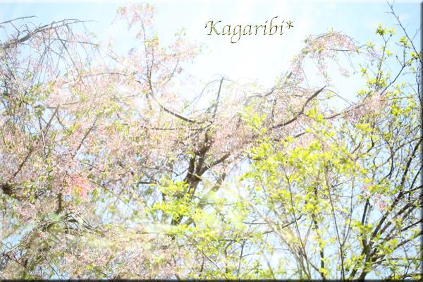 leaf22.jpg
