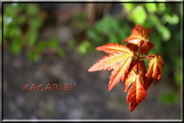 leaf24.jpg