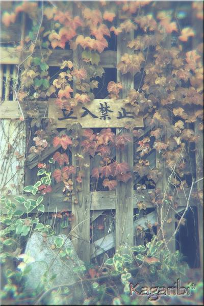 leaf31a.jpg