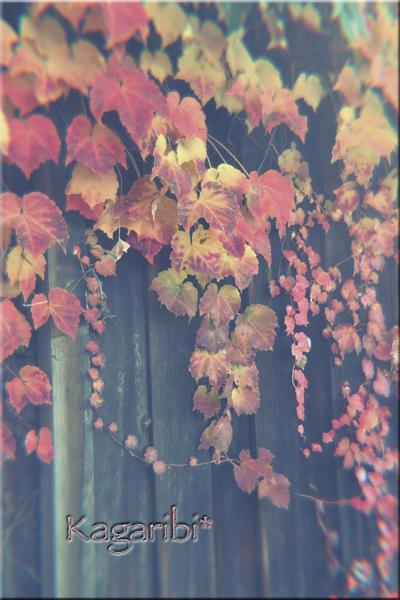 leaf31b.jpg