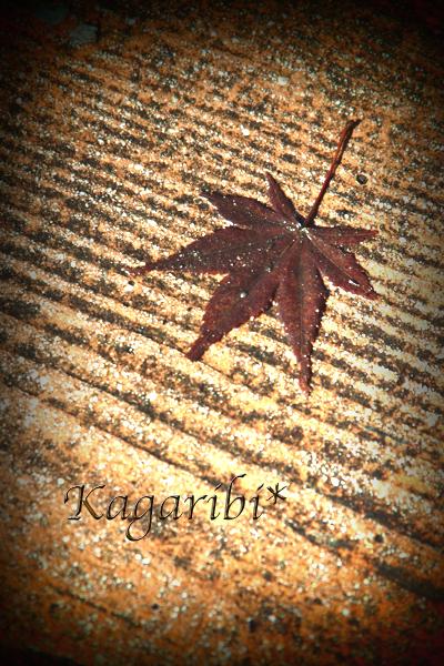 leaf32.jpg