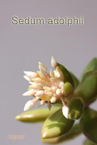 leaf6a.jpg