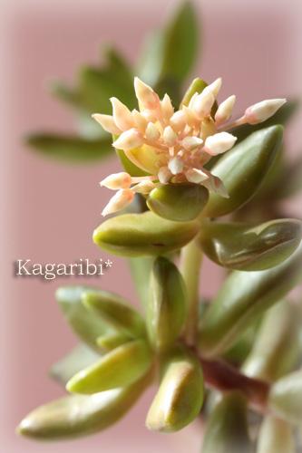 leaf6b.jpg