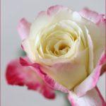花と緑の贈り物