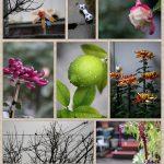 forte garden*