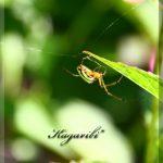 6月の蜘蛛
