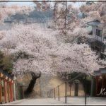 西國寺の桜